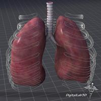 Lungs External 3D Model