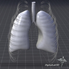 15 12 49 587 dl3d lungsexternal grayscale 4