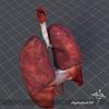 15 13 08 928 respiratory 3 4