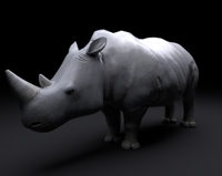 Free Rhino Rig 3D Model