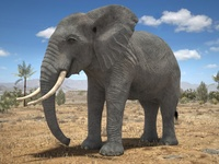 African Elephant Rigged for 3dsmax 3D Model