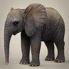 16 39 07 836 realistic low poly baby elephant 01 4