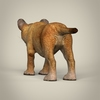 16 41 00 83 realistic low poly baby lion 04 4