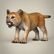 Low Poly Realistic Baby Lion 3D Model