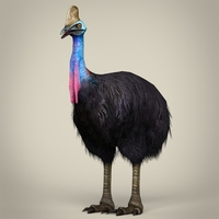 Low Poly Realistic Cassowary 3D Model