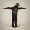 16 44 29 748 realistic low poly chimpanzee 06 4