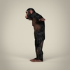 16 44 32 441 realistic low poly chimpanzee 03 4