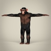 16 44 34 853 realistic low poly chimpanzee 01 4