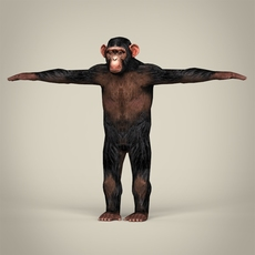 Low Poly Realistic Chimpanzee 3D Model