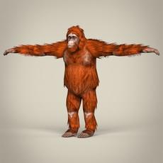 Low Poly Realistic Orangutan 3D Model