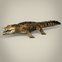 Low Poly Realistic Crocodile 3D Model