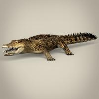 Low Poly Realistic Crocodile 3D Model
