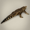 17 06 55 317 low poly realistic crocodile 05 4