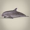 17 07 00 332 low poly realistic dolphin 01 4