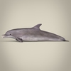 17 07 02 701 low poly realistic dolphin 03 4