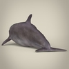 17 07 04 211 low poly realistic dolphin 04 4