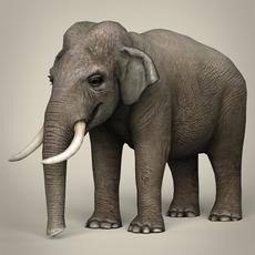 Low Poly Realistic Elephant 3D Model