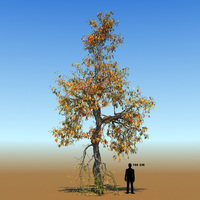 Free Braodleaf Tree Custom Seasons 09 3D Model