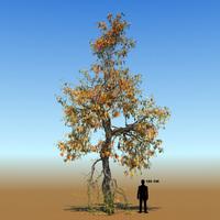 Free Braodleaf Tree Custom Seasons 09 3D Model