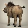 17 38 18 348 low poly realistic warthog 04 4