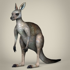 Low Poly Realistic Kangaroo 3D Model