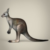 17 38 24 74 low poly realistic kangaroo 03 4