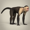 17 38 56 750 low poly realistic capuchin monkey 06 4