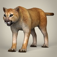 Low Poly Realistic Mountain Lion 3D Model