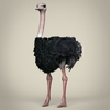 17 55 12 548 low poly realistic ostrich 01 4
