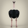 17 55 13 303 low poly realistic ostrich 02 4