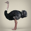 17 55 14 24 low poly realistic ostrich 03 4