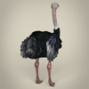 17 55 15 545 low poly realistic ostrich 05 4