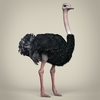 17 55 16 304 low poly realistic ostrich 06 4