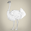 17 55 17 800 low poly realistic ostrich 08 4