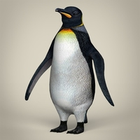 Low Poly Realistic Penguin 3D Model