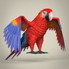 17 55 52 5 low poly realistic parrot 06 4