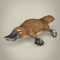 Low Poly Realistic Platypus 3D Model