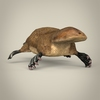 17 56 04 208 low poly realistic platypus 04 4