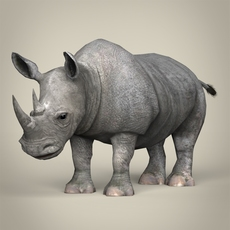 Low Poly Realistic Rhinoceros 3D Model