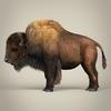 17 56 18 695 low poly realistic montana buffalo 03 4