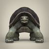 17 56 31 978 low poly realistic tortoise 02 4