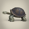 17 56 32 730 low poly realistic tortoise 03 4