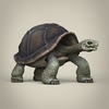 17 56 35 719 low poly realistic tortoise 06 4