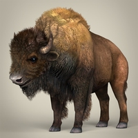 Low Poly Realistic Montana Buffalo 3D Model