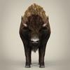 17 56 53 251 low poly realistic montana buffalo 02 4