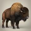 17 56 56 433 low poly realistic montana buffalo 06 4