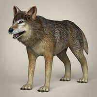 Low Poly Realistic Wolf 3D Model