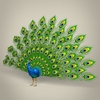 17 59 56 304 low poly realistic peocock 01 4