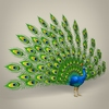 18 00 03 959 low poly realistic peocock 06 4