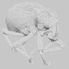 18 26 26 275 brachycerus ornatus 4